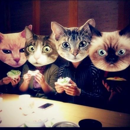 小猫聚餐手绘画
